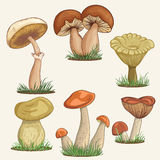 Set with a variety of vintage colorful realistic mushrooms. Stock Photo