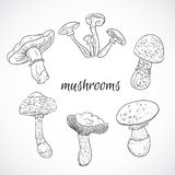 Set with a variety of vintage mushrooms. Collection of retro black and white hand drawn vector illustration. Royalty Free Stock Photography