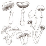 Set with a variety of vintage mushrooms. Royalty Free Stock Photography