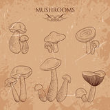 Set with a variety of vintage mushrooms. Stock Photos
