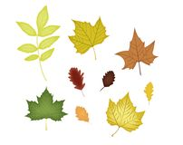 Set of various autumn leaves . stock illustration