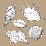 Set of various beautiful mollusk sea shells, isolated vector illustration Royalty Free Stock Photo