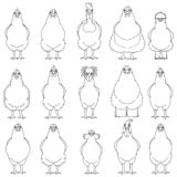 Set of various chicken line art. Set of various breeds of chicken line arts on white vector illustration