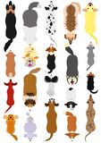 Dogs breed top view set. Set of Various breeds of dogs from high angle view on white vector illustration