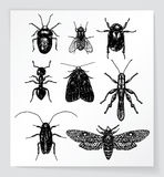 Set of various bugs and insects Stock Photo