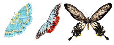 Set of various butterflies isolated on white background. Colorfull flying insects. Natural bright wildlife detailed illustration. royalty free illustration