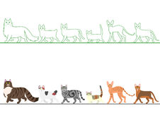 Set of various cats walking in line Royalty Free Stock Images