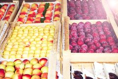 Set of various colorful fresh fruits in tray on street. Fresh fruits in market stock image
