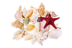 Set of various colorful seashells Royalty Free Stock Photography