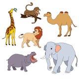 Set of various cute animals, safari animals. Vector illustration isolated on white.  Royalty Free Stock Photos