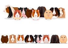 Set of guinea pigs group and border. Set of various cute guinea pigs, group and border on white royalty free illustration