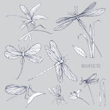 Set of various dragonflies in different poses. Monochrome hand drawn collection flying adder. Vector illustration. Stock Images