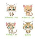 Set of various feline species. Set of various feline animal species vector illustration