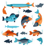 Set of various fish. Objects for decoration, design on advertising booklets, banners, flayers Stock Photo