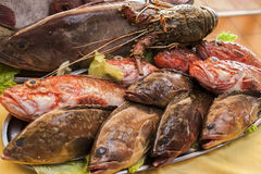 Set of various fresh fish. Prepared for cooking in restaurant Royalty Free Stock Photo