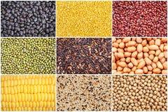 Set of various grain Royalty Free Stock Photos