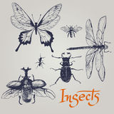 Set of various insects. Vector. Stock Images