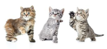 Set of various kittens with paw up isolated Stock Images