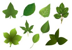 Set of various leaves, cdr vector Stock Image