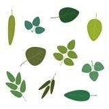 Set of various leaves. Illustration Stock Photo
