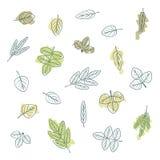 Set of various leaves. Illustration Stock Image