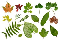 Set of various leaves of plants: herbs, bushes and trees, herbarium. Isolated, white background. royalty free stock photography