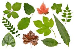 Set of various leaves of plants: herbs, bushes and trees, herbarium. Isolated, white background. stock images