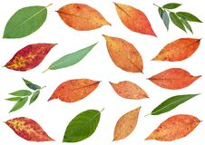 set of various leaves of willow trees isolated stock photos