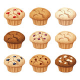 Set of various muffins. Vector illustration. Stock Photos