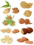 Set of various nuts Stock Photos