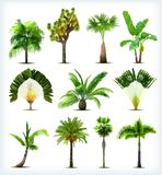 Set of various palm trees. Vector Stock Images