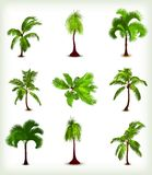 Set of various palm trees. Vector illustration Royalty Free Stock Photography