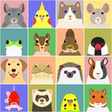 Set of various pet animals face. Set of various pet animal face in a square, with colorful background royalty free illustration