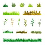 Set of Various Plant Elements Grass, Bushes, Stems, Watercolor Hand Drawn and Painted. Isolated on White Background vector illustration