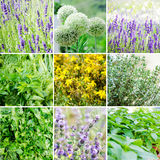 Set of various plants and herbs Stock Image
