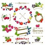 Set of various ribbons, labels with berries. Royalty Free Stock Image