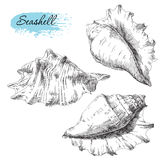 Set of various sea shells Royalty Free Stock Photos