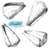 Set of various sea shells Royalty Free Stock Images