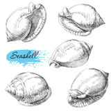 Set of various sea shells Stock Images