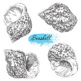 Set of various sea shells Stock Image
