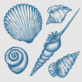 Set of various seashells. Vintage hand drawn set of various blue seashells.  on white background. Vector illustration. Engraving illustration Royalty Free Stock Photo