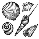 Set of various seashells Royalty Free Stock Images