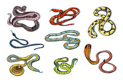 Set of various snake viper, cobra and other. Colorful hand drawn collection serpent. Vector illustration. Royalty Free Stock Photography