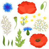Set of various spring flowers, leaves. Elements Royalty Free Stock Photography