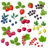 Set of various stylized fresh berries. Royalty Free Stock Images