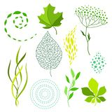 Set of various stylized green leaves and elements. Nature illustration vector illustration