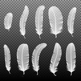 Set of various white bird feathers on a black background. Collection 3d realistic style soft fluffy macro swan vector. Set of various white bird feathers on a Stock Photography