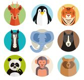 Set of vector animal icons in round buttons. With the heads of a roe deer  penguin  tiger  horse  elephant  dog  panda  monkey and bear in simple kids cartoon Royalty Free Stock Image