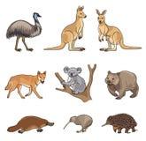 Set of vector Australian animals Stock Photo