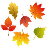 Set of vector autumn leaves Stock Photography
